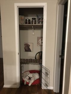 Dog Kennel In Bedroom