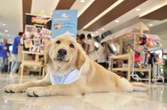 O movimento pet friendly tem crescido e em Brasília existem vários lugares para curtir o verão na companhia do seu amigo de quatro patas. O Correio sugeres alguns lugares que irão agradar a família toda.