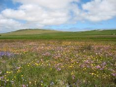 The Tienie Versveld Flower Reserve is just outside the West Coast town of Darling Town And Country, Nature Reserve, Looking Stunning, Spring Flowers, Spring Time, West Coast, South Africa, Cape, Magic
