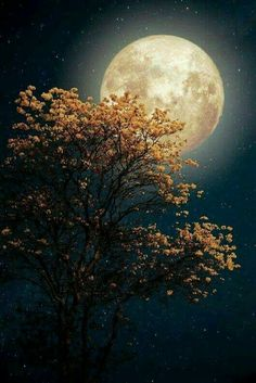 Moonstruck...