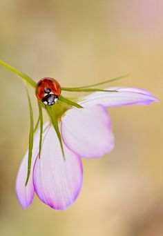 Lady Love, Mandy Disher