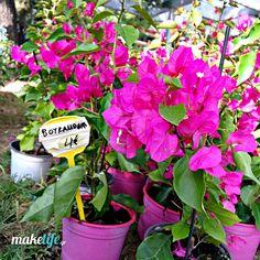 8 ιδανικά λουλούδια για το μπαλκόνι μου μόνο με 16 ευρώ Gelato Shop, Home Hacks, Garden Plants, Home And Garden, Flowers, House, Gardening, Home Decor, Decoration