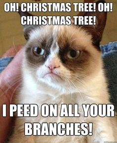 Oh Christmas Tree, Oh Christmas Tree! I peed on all your branches!  #grumpycat #meme