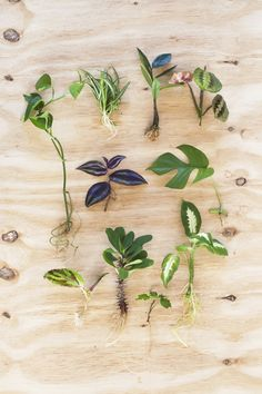 Garden Plants, Indoor Plants, Clusia, Paludarium, Calathea, Hanging Planters, Plant Decor, Planting Flowers, Flora