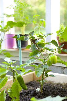 Ett växthus att bo i - Hildas hem