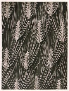 Karl Blossfeldt. A beautiful collection of illustrations