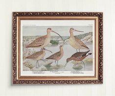 Vintage Birds, Vintage Prints, Vintage Art, Vintage World Maps, Nature Prints, Art Nature, Bird Prints, Birds Of America, Landscape Mode