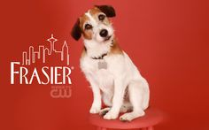 Eddie - FRASIER.  Our Princess Pooch looks just like this!  Only difference is that she is a very light tan instead of brown!