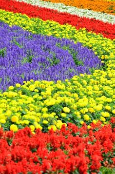 I want to see the various flowers of the season, especially lavender. Love Flowers, Beautiful Flowers, Spring Flowers, Wonderful Places, Beautiful Places, Rose Flower Arrangements, Adventure Tours, Exotic Plants, Brighten Your Day