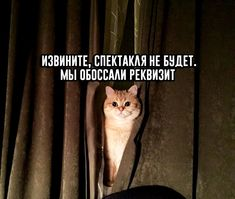 """Sorry, there will be no performance. Funny School Memes, School Humor, Funny Memes, Memes Humor, Russian Quotes, Russian Memes, Funny Cats, Funny Animals, Hello Memes"