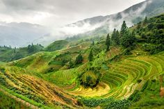 """Rice """"terraces"""" in China. (Photo: jackfrench/Flickr)"""
