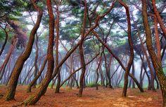 É como se as fadas pincelassem o ar com tintas de cores que ainda não inventaram! www.luadasfadasolivro.blogspot.com