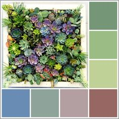 A color palette Barbara created based on beautiful succulents | Barbara Gilbert Interiors