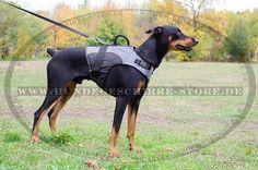 Dobermann Hundegeschirr aus Nylon mit Polsterung