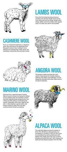"""Ewe's not fat, Ewe's fluffy"""