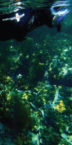 Oppdag livet under vann i vakre Lofoten! Gruppen drar ut i ribbåter og snorkler på forskjellige steder. Underveis kan man nyte landskapet og speide etter dyreliv, både over og under vann. Opplevelsen passer for alle!
