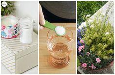 Uses For Epsom Salt  5. Garden Fertilizer    Studies show that Epsom salt may help plants grow greener with higher yields and more blooms. Magnesium helps seeds to germinate, increasing chlorophyll production and improving phosphorus and nitrogen uptake.
