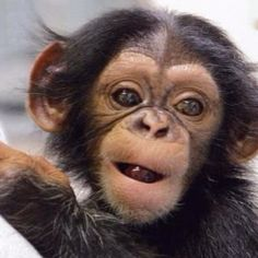 Cute Baby Animals, Animals And Pets, Funny Animals, Los Primates, Wild Animals Photos, Cute Monkey, Tier Fotos, Cute Animal Pictures, Animals Beautiful