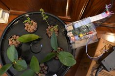 Automated Aeroponics System Using Raspberry Pi - http://www.instructables.com/id/Automated-Aeroponics-System-Using-Raspberry-Pi/?ALLSTEPS