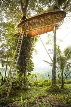 Ubud, Bali, Indonesia - February 4, 2014: Pod-shaped bamboo tree house supported by poles and palm trees