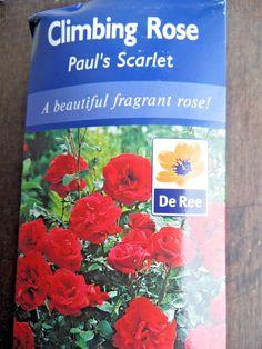 Climbing Rose's from Fragrant Roses, Climbing Roses, Garden, Ebay, Beautiful, Garten, Lawn And Garden, Gardens, Gardening