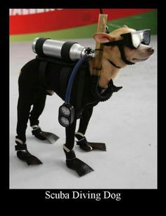 Scuba dog...God's lovable creatures and what us humans do to them