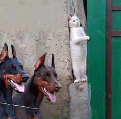 Funny pictures 26 PICS#funny-pictures #funny-pictures-birthday #funny-pictures-of-the-day #funny-pictures-photos Animal Jokes, Funny Animal Memes, Dog Memes, Funny Animal Videos, Funny Animal Pictures, Cute Funny Animals, Cute Baby Animals, Funny Dogs, Cute Cats