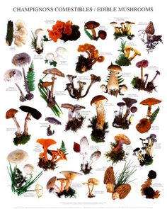 Mushrooms | Mushrooms are some of the tastiest and deadliest things on the planet
