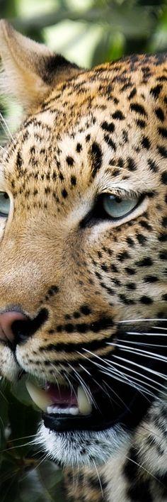 Big Cat #Cat lovers - Join http://facebook.com/OzziCat * Get cat #magazine http://OzziCat.com.au