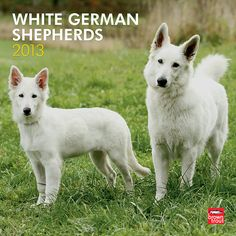 White German Shepherds 2013 Wall Calendar | $14.99 add this to my Christmas list!!