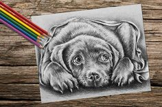 Relax and enjoy this printable coloring page in the comfort of your home! This adorable dog is waiting for your creative coloring talent!