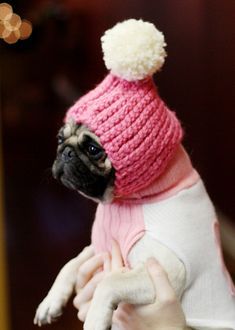 put your hat on Pug! it's cold outside