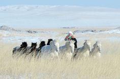 A woman risdes behind horses on a prairie in Mongolia.
