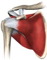 Shoulder protocols - Bernard F. Hearon, M.D. Great videos.