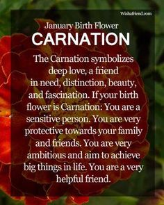 January Birth Flower : Carnation Which is the Birth Flower for January? Know about the January Birth Flower Carnation here. Find the meaning of January Flowers here. January Birth Flowers, Birth Month Flowers, January Flower, January Born, Hello January, Capricorn Quotes, Capricorn Traits, Tarot, Capricorn And Aquarius