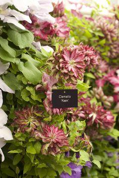 RHS Chelsea Flower Show – Focus on the Flowers! Chelsea Flower Show, Flower Gardening, Garden Inspiration, Dreams, Crochet, Google, Plants, Gardens, Flowers