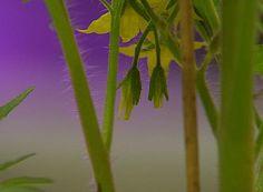 El mensaje de las plantas  | euronews, futuris