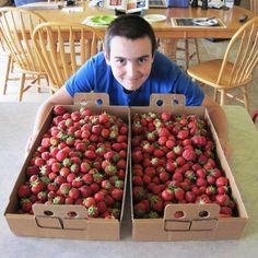 Preserving Strawberries Four Ways – Freezing, Drying, Fruit Leather and Kombucha