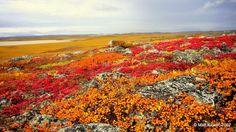 Fall on the tundra, Hope Bay Belt. Nunavut