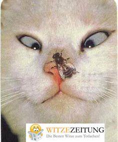 Katze und Wespe