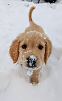 Most up-to-date Photo dogs and puppies labrador Ideas Complete you like your pet dog? Good doggy attention and also teaching will Super Cute Puppies, Baby Animals Super Cute, Cute Baby Dogs, Cute Little Puppies, Cute Dogs And Puppies, Cute Little Animals, Cute Funny Animals, Doggies, Puppies Puppies