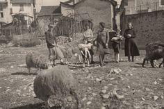 Piemonte - Pastore con Famiglia e gregge anni 60   #TuscanyAgriturismoGiratola