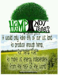 Hemp...not trees.