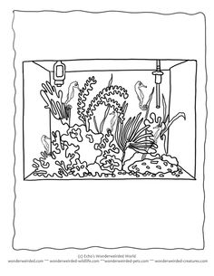 Aquarium Coloring Pages Pet Seahorse, Aquarium Seahorses as Pets to Color from our Pet Coloring Pages Collection