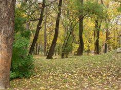 Herbst in Temeswar