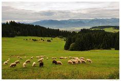 Slowakije Hoge Tatra wandelreis singlereis wandelvakantie groepsreis Aktiva Tours