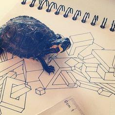 thinking turtle