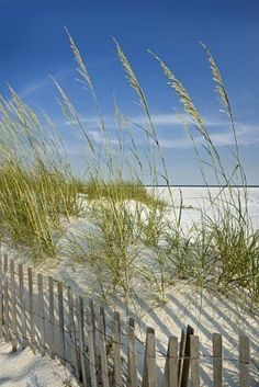 sand dune fences.