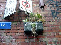 urban flower arranging