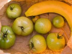 Placing a ripening banana or apple in an enclosed bag with green tomatoes helps them to ripen as the fruit releases ethylene.  Also line bottom of cardboard box with newspaper place a single layer of tomatoes, make sure tomatoes do not touch, put an apple or banana in cover with another sheet of newspaper